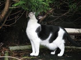 18猫1.jpg